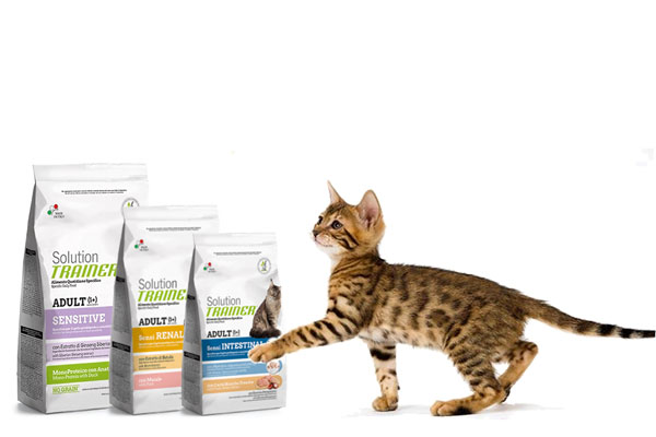 solution trainer gatto
